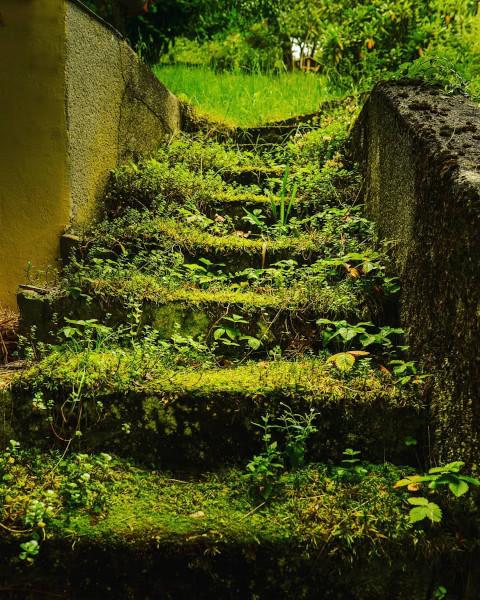 Mit Moos und Gras bewachsene Stufen